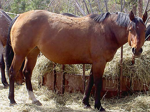 Horses Breeding Women