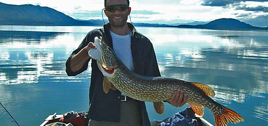 The Yukon features incredible northern pike fishing